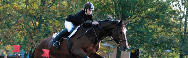 cavallo_200